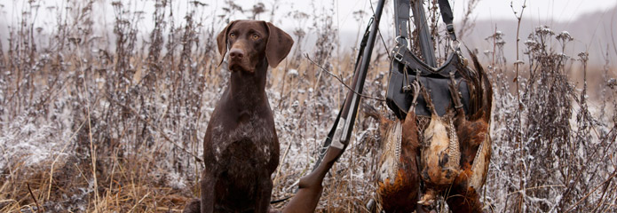 A hunting dog in a foggy field with upland birds.