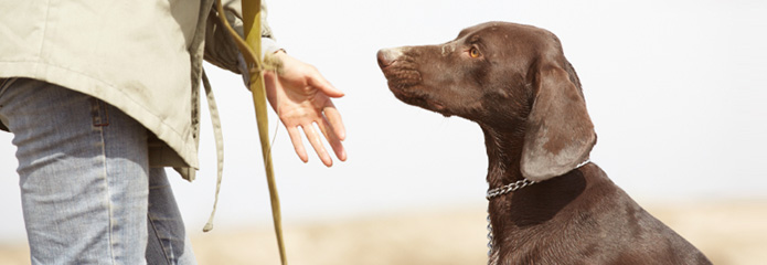 A dog receiving obedience training in southern Illinois.
